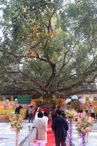 Carpeted pathway leading to the living descendant of the Bodhi tree that Buddha gained enlightenment under.