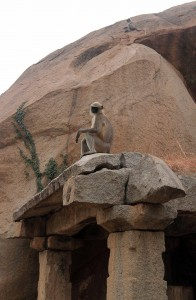 Monkey hanging out on some ruins in Hampi.