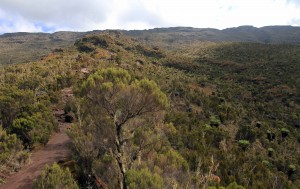 Trail through the moorland.
