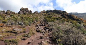 Looking at the trail between Machame Camp and Shira Cave Camp.