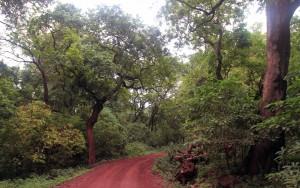 Dirt road trail through Lake Manyara National Park.