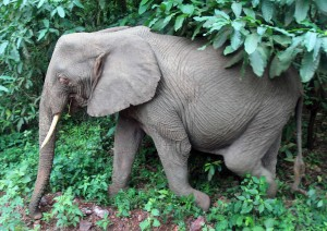Elephant walking right next to our safari vehicle.