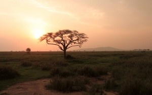 The sun setting over the Serengeti.