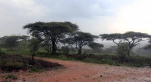Rain falling on the Serengeti.