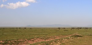 View of the sunlit Serengeti with many animals seen merely as dots in the distance.