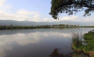 Pond inside Ngorongoro Crater.