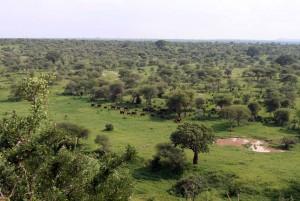 Elephant herd moving toward a waterhole.