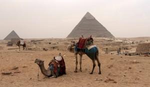 Camels at Giza.