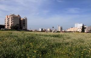 Field of wild flowers in Larnaca.