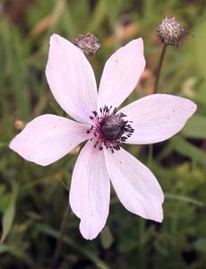 Closeup of a wild flower.