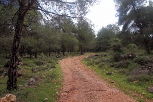 The trail (i.e. dirt road) through the forest.