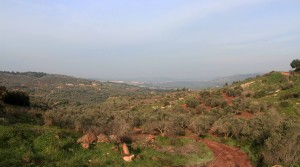 Trail leading away from Cana, lined with olive trees.