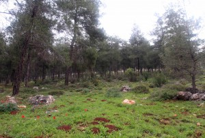 Forest south of Tur'an.