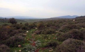 The trail leading to the Horns of Hattin.