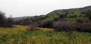Landscape near Nemerim Stream.