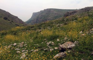 Wildflowers with Mount Arbel and its cliffs in the distance.