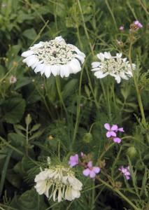 More wildflowers.