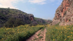 The alternative trail through some lovely terrain covered in flowers.