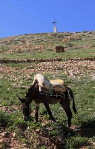 Donkey waiting to be ridden near Wadi Qelt.