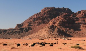 A goat herder and his goats in Wadi Rum, with a Bedouin camp in the distance.
