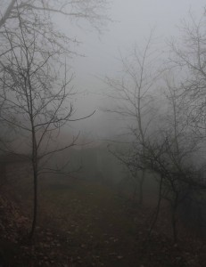 Trees and fog in Sighnaghi.