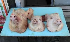 Three little piggies that went to the market and never returned home.
