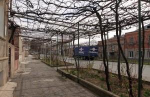 Street in Gori with overhead grape vine trellises on each side.