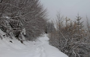Another portion of the trail covered in snow.