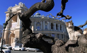Cat in a tree near the Odessa Opera and Ballet Theater.