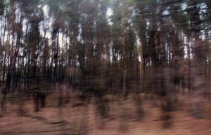 Driving through the woods in Chernobyl.