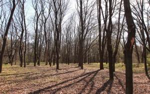 Barren trees in Valea Trandafirilor Park.