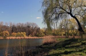 Pond in Valea Trandafirilor Park.