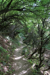 Trail through the woods, which leads to the Holy Trinity Monastery from Kalambaka.