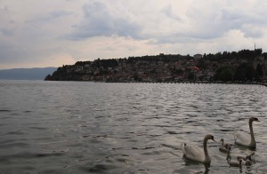 Family of swans in Lake Ohrid.