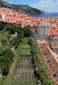 Garden inside the old city of Dubrovnik.