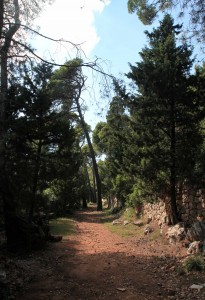Trail through the woods on Lokrum Island.
