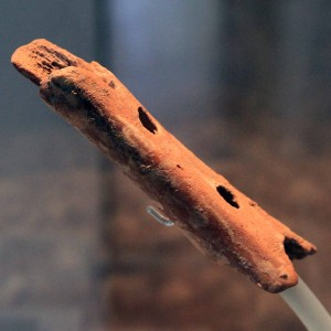 Flute made by Neanderthals from the bone of a cave bear (approximately 60,000 years old).