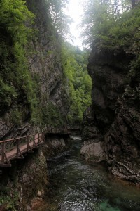 The walkway through Vintgar Gorge, again.