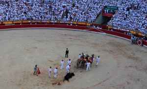 The sixth bull being dragged out of the ring.