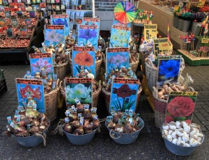 Tulip bulbs for sale in the Flower Market.