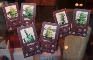 Cannabis seeds for sale.
