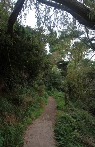 The Howth coastal trail passing through a forested area.