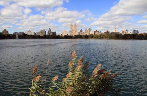 The reservoir in Central Park.