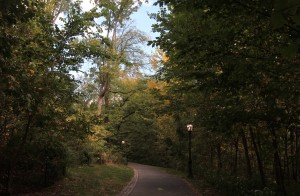 A path in Central Park, illuminated during the daytime.