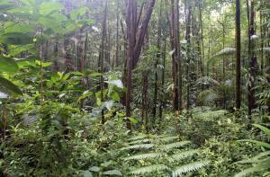 Tropical forest near Emerald Pool.