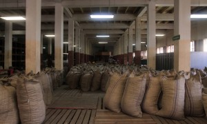 Many sacks of nutmeg inside the Gouyave Nutmeg Processing Station.