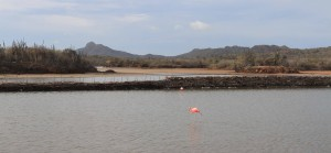 Flamingos in Goto Meer.