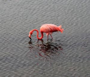 Closeup of a flamingo.