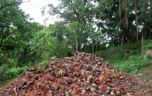 Mound of coconut husks (used for fuel) at the plantation.