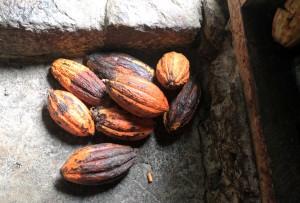 Cocoa pods.